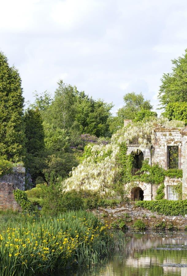 Glicine bianche sulle rovine, da un lago, in giardino abbellito immagine stock