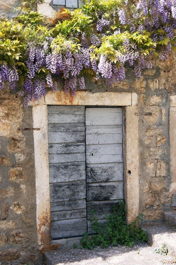 Glicine sull'entrata principale di vecchia casa fotografia stock