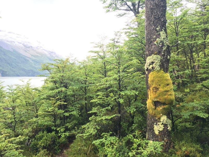 Glimlach van de boom stock afbeelding