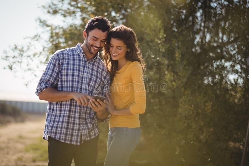 Glimlachend jong paar die mobiele telefoon met behulp van bij olijflandbouwbedrijf stock foto