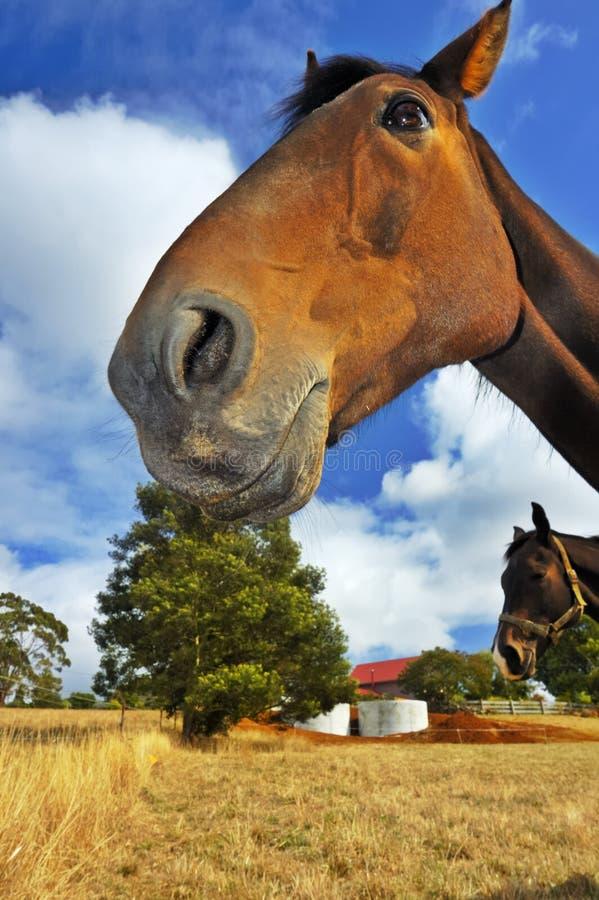 Glimlachend paard stock foto