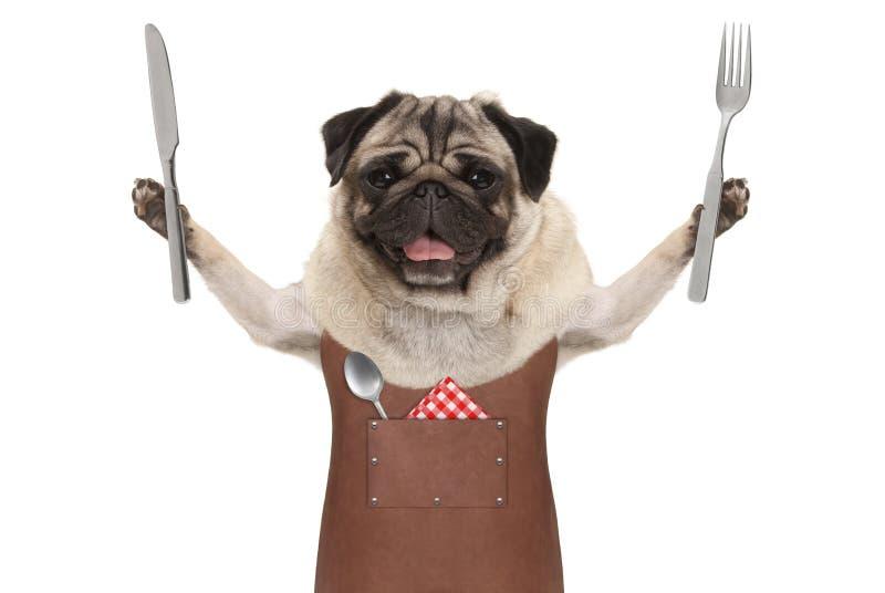 Glimlachend pug hond die de schort van de leerbarbecue, dragen die bestek voor het eten van maaltijd steunen stock fotografie
