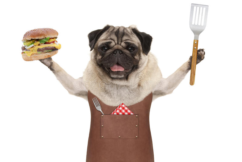 Glimlachend pug hond die de schort van de leerbarbecue dragen, steunend hamburger en spatel stock foto