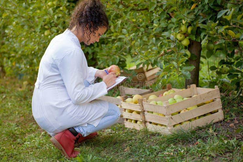 Glimlachende agronoom met notitieboekje die zich in appelboomgaard bevinden stock foto's