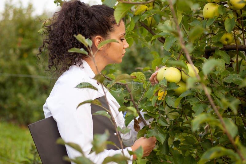 Glimlachende agronoom met notitieboekje die zich in appelboomgaard bevinden royalty-vrije stock foto's