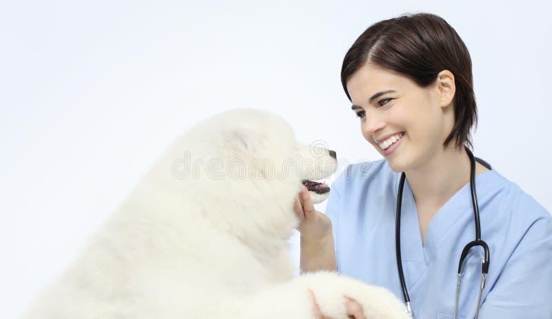 Glimlachende die Dierenarts van het hond de veterinaire onderzoek op whit wordt geïsoleerd royalty-vrije stock afbeelding