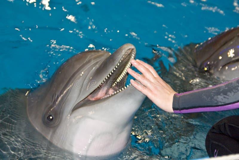 Glimlachende dolfijn stock afbeeldingen