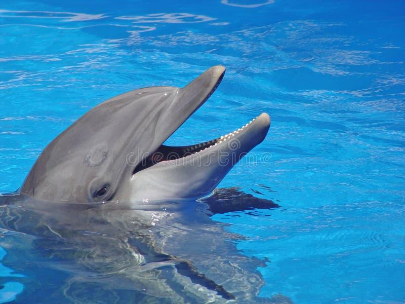 Glimlachende dolfijn royalty-vrije stock afbeeldingen