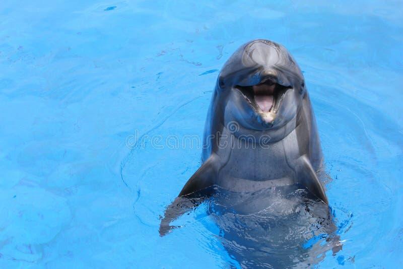 Glimlachende dolfijn royalty-vrije stock afbeelding