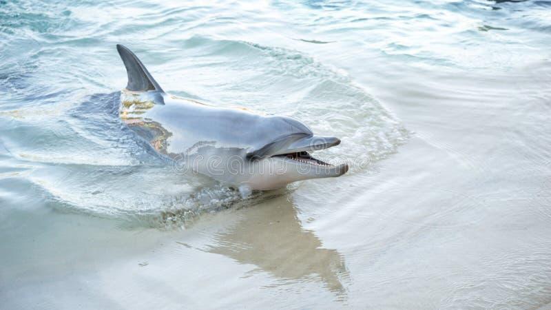 Glimlachende Dolfijn stock fotografie