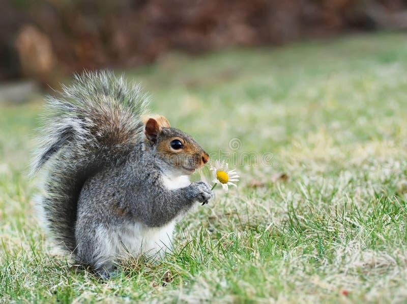 Glimlachende eekhoorn stock foto's