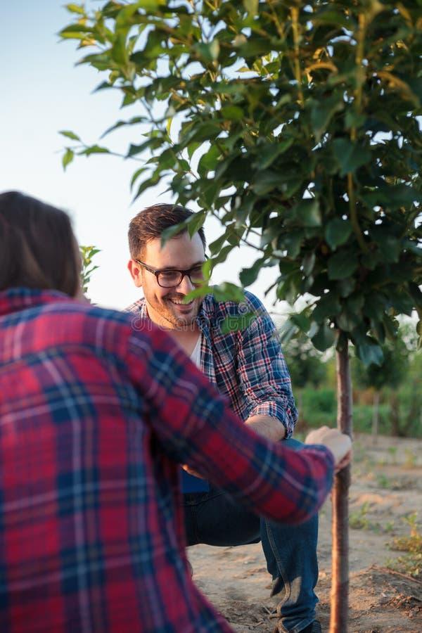 Glimlachende gelukkige jonge vrouwelijke en mannelijke landbouwer en agronoom die geënte fruitboom in een grote boomgaard inspect stock afbeelding