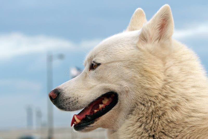 Glimlachende hond stock fotografie