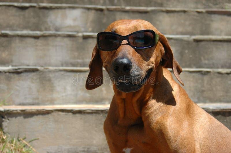 Glimlachende hond royalty-vrije stock foto