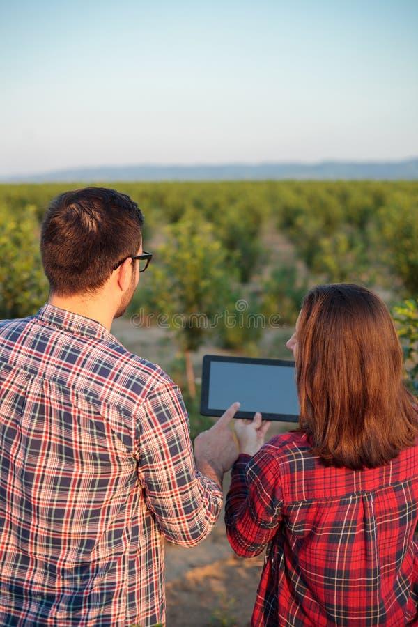 Glimlachende jonge mannelijke en vrouwelijke landbouwers of agronomen die fruitboomgaard inspecteren Mening van erachter stock foto