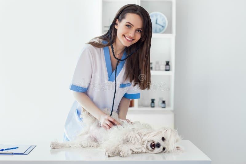 Glimlachende veterinaire arts die leuke witte hond in kliniek onderzoeken royalty-vrije stock foto
