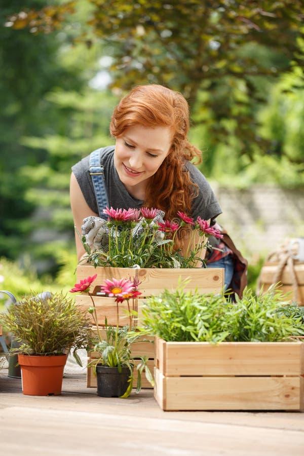 Glimlachende vrouw die roze bloemen ruiken stock afbeeldingen