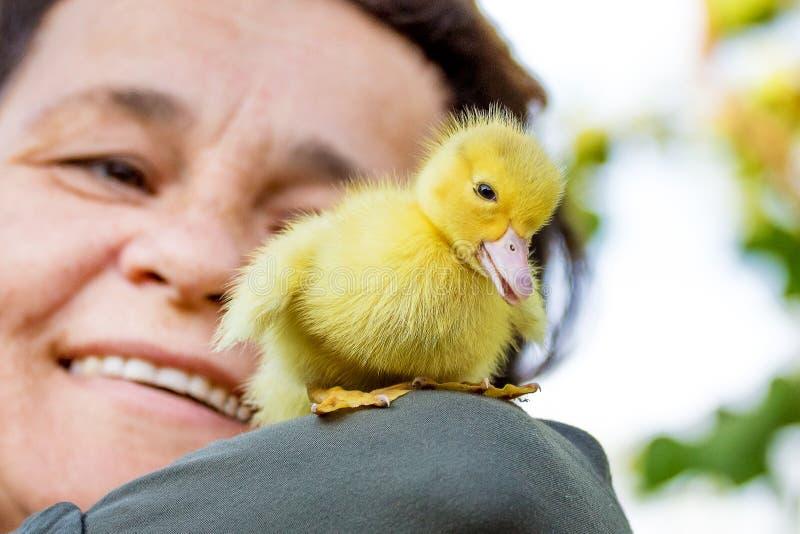 Glimlachende vrouw met een klein geel eendje Het groeien ducks_ royalty-vrije stock foto