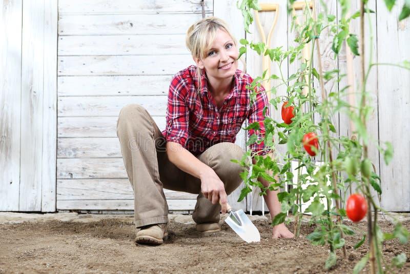 Glimlachende vrouw in moestuin, die met binnen het hulpmiddel van de tuintroffel aan grond, kersentomatenplanten en witte houten  royalty-vrije stock afbeeldingen