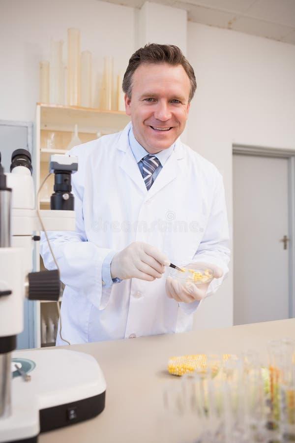 Glimlachende wetenschapper die graanzaden in petrischaal onderzoeken royalty-vrije stock fotografie
