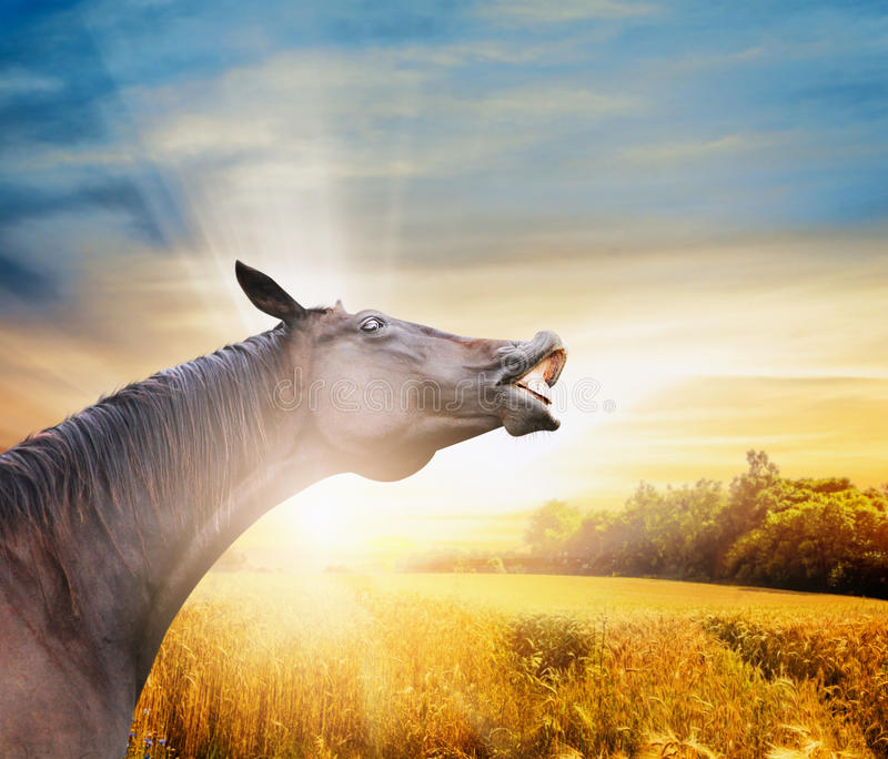 Glimlachpaard op de achtergrond van het de herfstgebied stock afbeelding