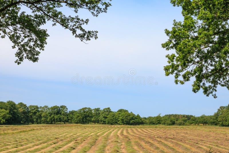 Glimp op gemaaide hayfield stock foto's