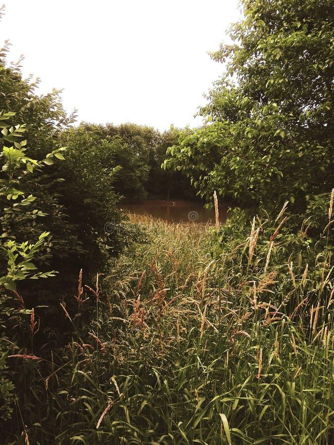 Glimp van de rivier stock foto