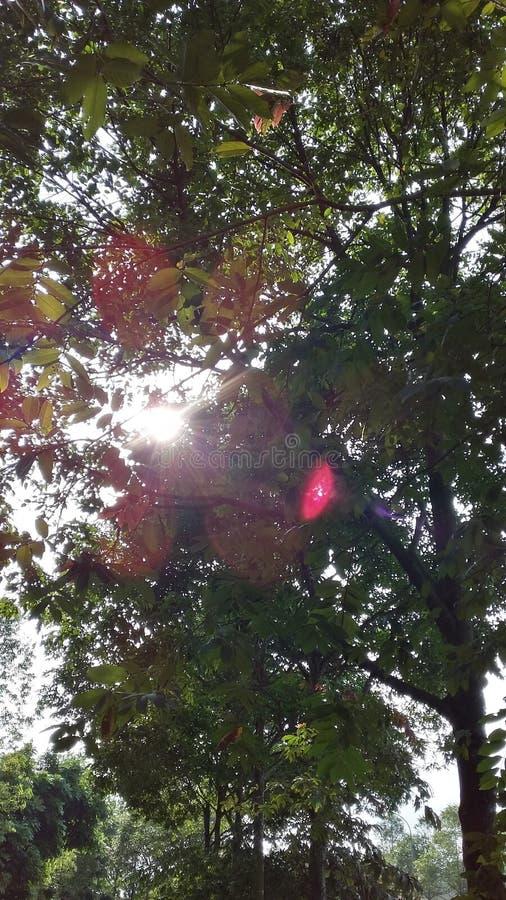 Glimp van zonlicht door de bomen stock foto's