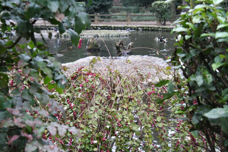 Glimpse of a city park. With lush plants stock photo