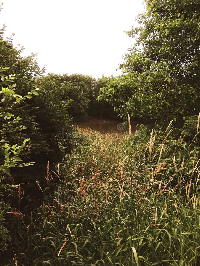 Glimpse of the river. Water, spring, green, plants, trees, growth stock photo