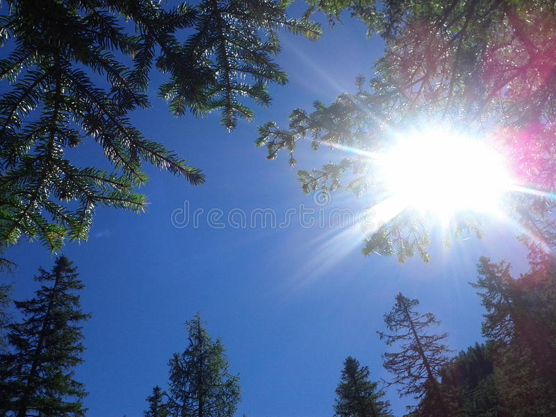 Glimpse of sky between conifers stock image