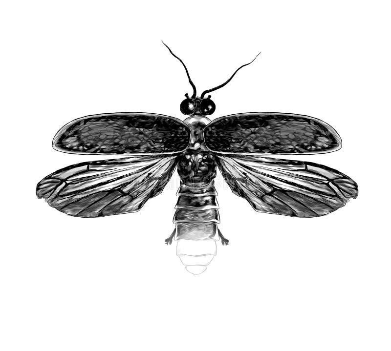 Glimworm met open vleugels hoogste mening symmetrisch stock illustratie