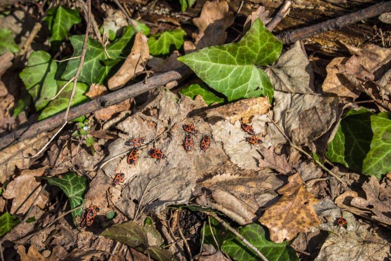 Glimwormen op het gevallen blad stock foto's
