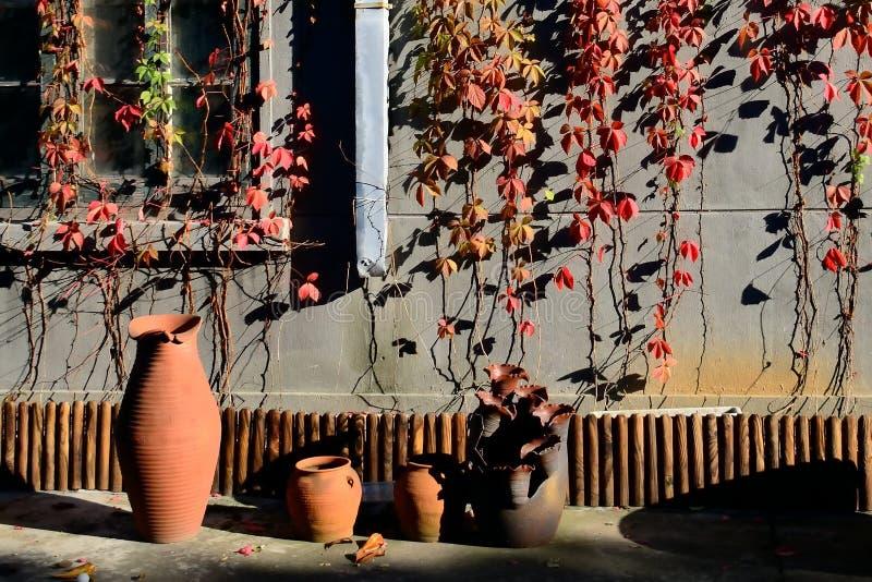 Glinianego garnka blisko ściana zakrywająca z kolorowymi liśćmi obraz royalty free