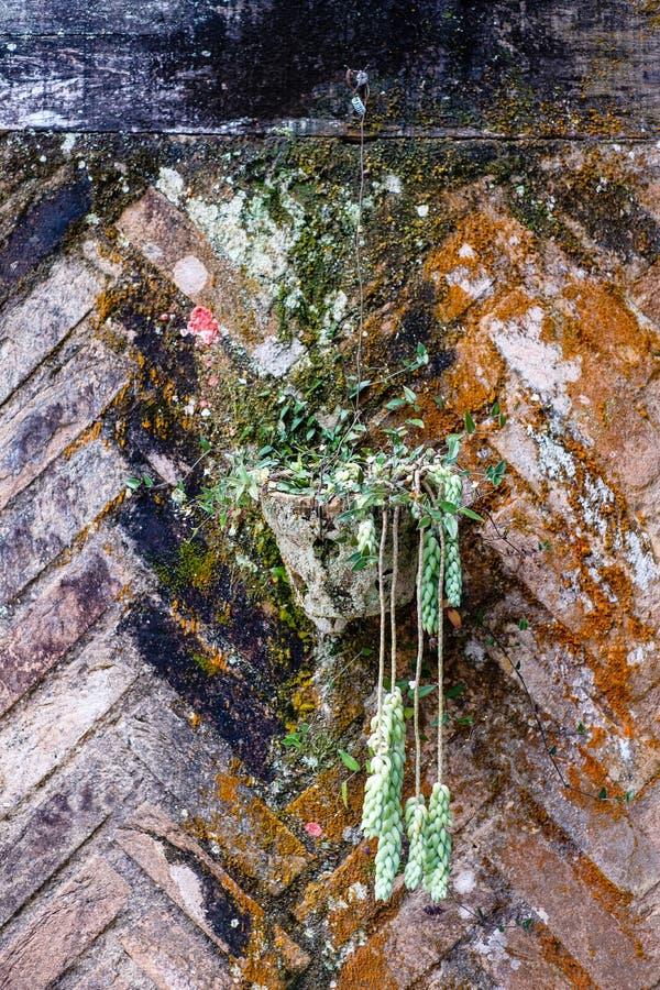 Gliniany garnek na barwionym ściana z cegieł liszaj i grzyb, pełno fotografia stock