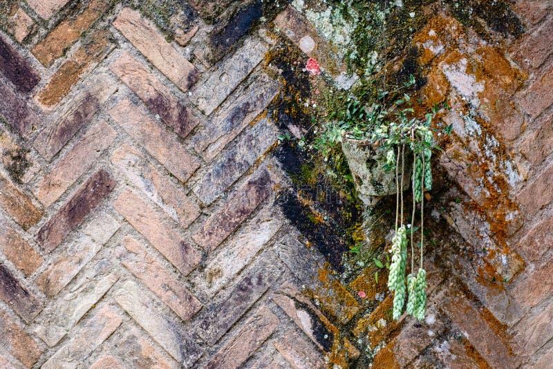 Gliniany garnek na barwionym ściana z cegieł liszaj i grzyb, pełno zdjęcia royalty free