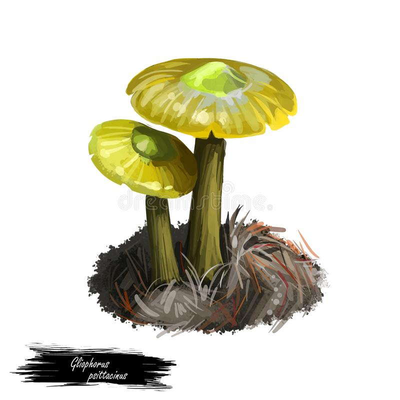 Gliophorus psittacinus Parrot Toadstool or Waxcap,colourful member of genus Gliophorus, found across Europe. Edible fungus. Isolated on white. Digital art stock illustration
