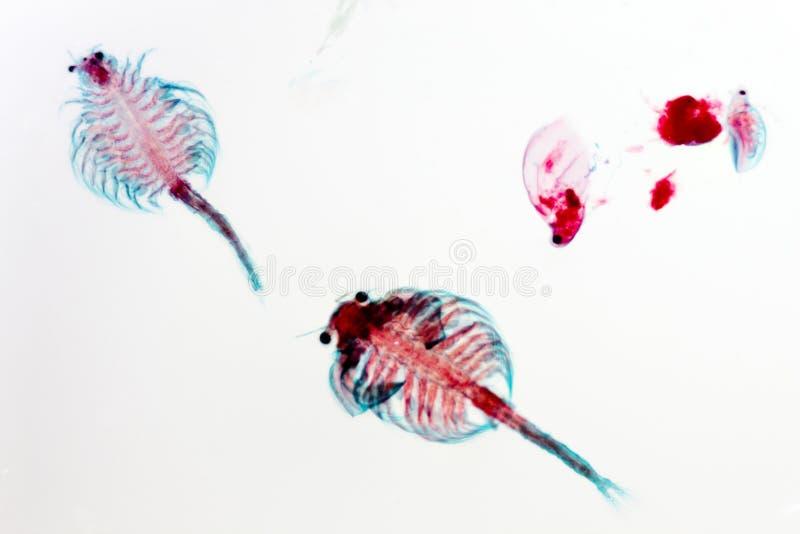 Glissière fixe par plancton photo stock