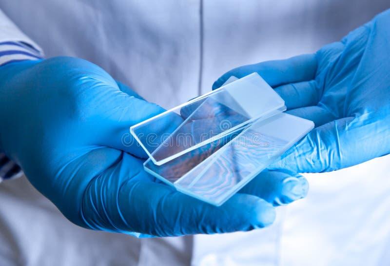 Glissières de microscope en verre givré de fixation de scientifique image libre de droits