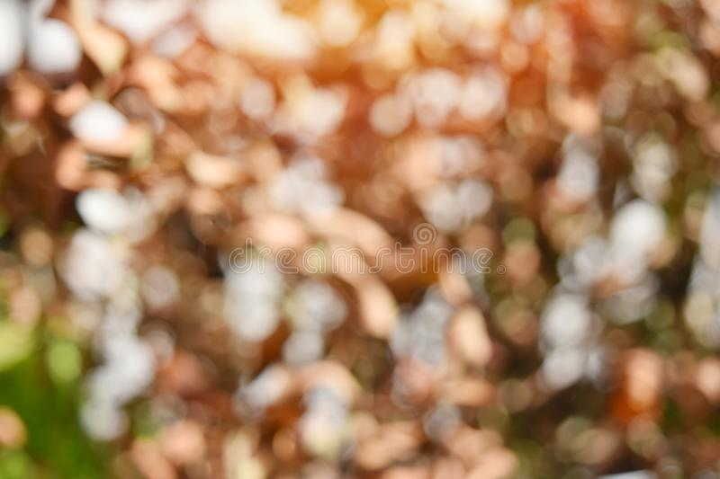 Glittering blur circular gold on brown background and empty space for text . stock photography
