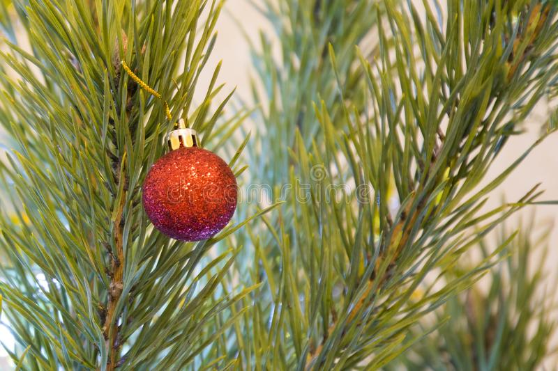 Glittering red ball on Christmas tree. Winter holidays background. New Year decoration. stock images