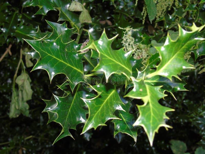 Glittra sidor i den Hertfordshire parklanden arkivfoton