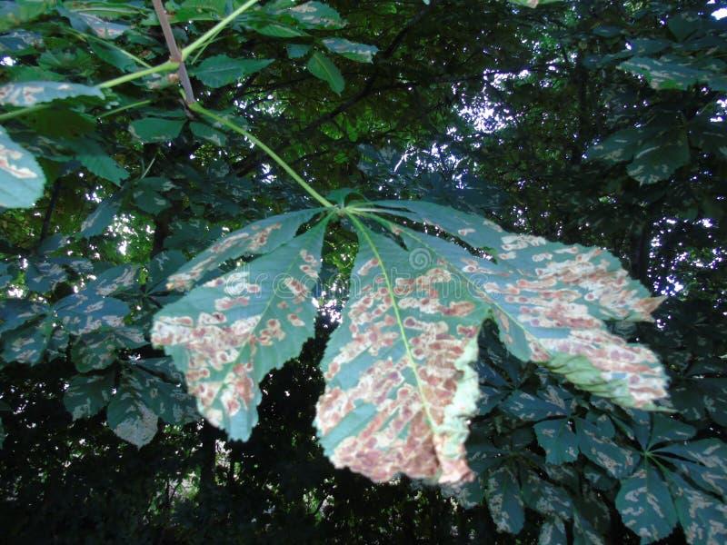Glittra sidor i den Hertfordshire parklanden arkivbild