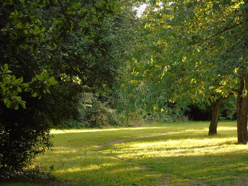 Glittra träd i den Hertfordshire parklanden arkivbild