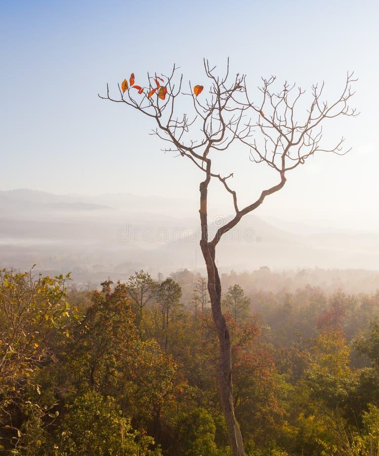 Globaal het verwarmen concept De eenzame dode boom onder de dramatische hemel van de avondzonsondergang bij droogte barstte woest stock fotografie