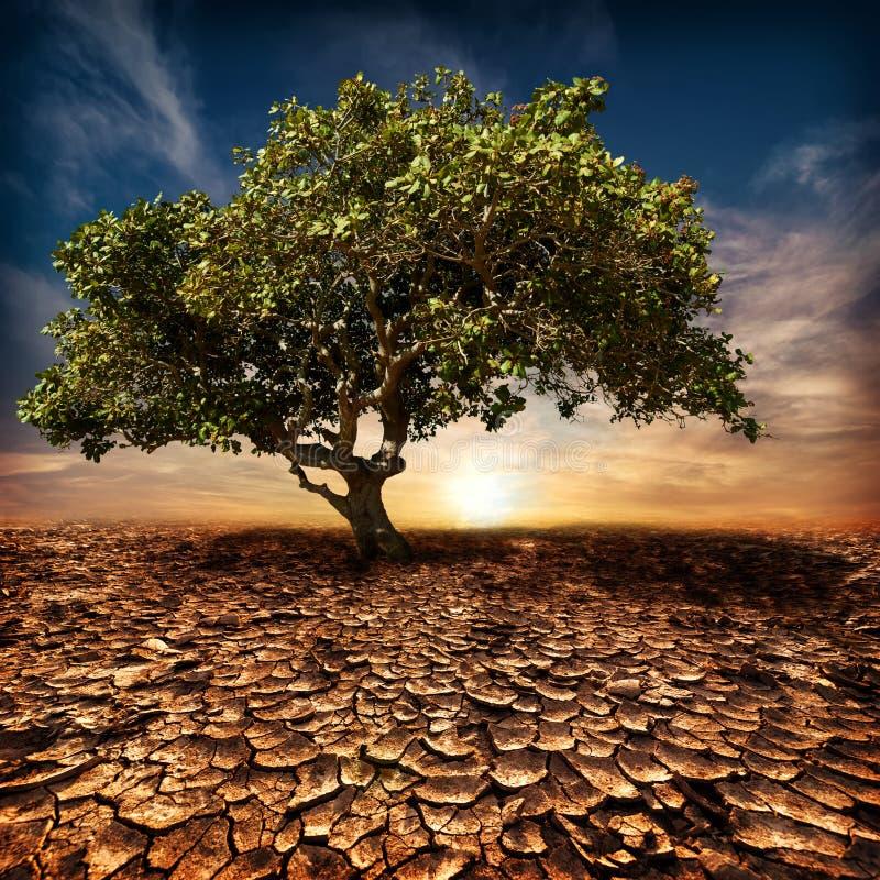 Globaal het verwarmen concept. Eenzame groene boom bij woestijn stock fotografie