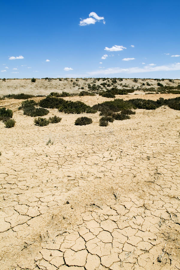 Global Warming. Heat baked ground cracked with only hardy shrubs growing in the salty soil royalty free stock images