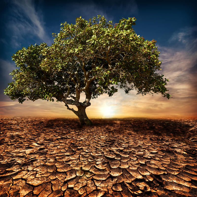 Global warming concept. Lonely green tree at desert stock photography
