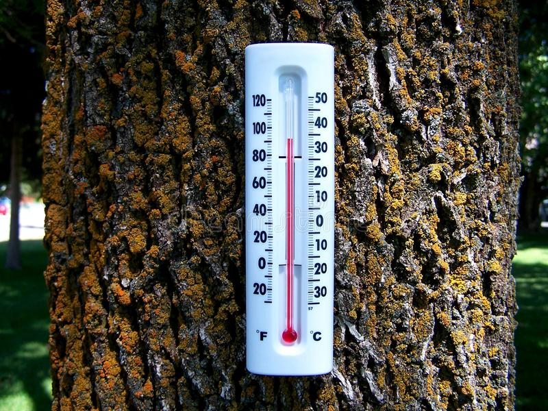Global Warming Forest 2 stock photography