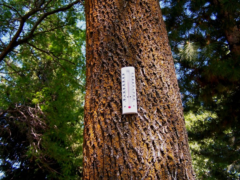 Download Global Warming Forest stock photo. Image of rain, carbon - 5517440